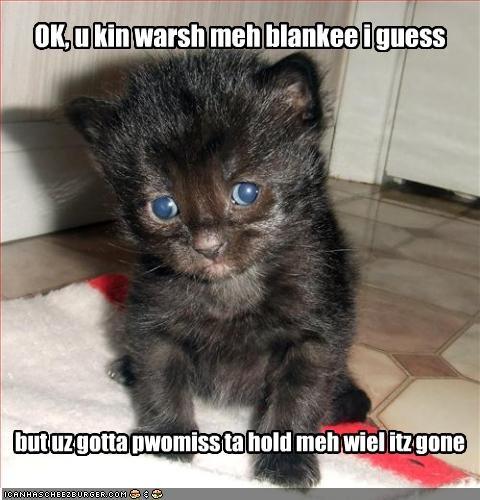 blanket cute kitten scared - 2116015360