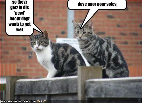 dose poor poor soles so theyz getz in dis 'pewl' becuz deyz wantz to get wet