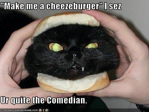 Cheezburger Image 2116490496
