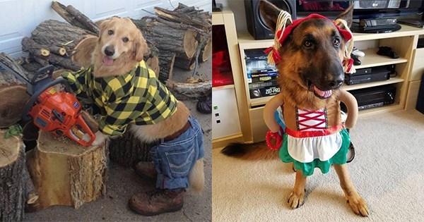 mascotas disfrazadas