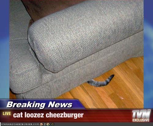 Cheezburger Image 2119208192