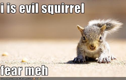 i is evil squirrel fear meh - Cheezburger - Funny Memes
