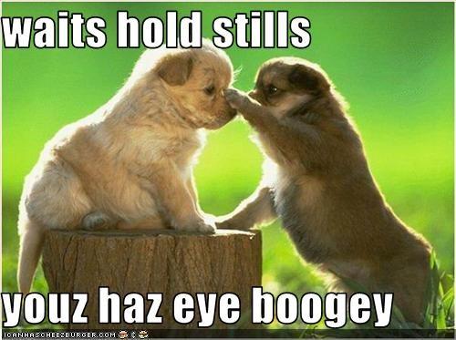 boogers eyes golden retriever help puppies puppy - 2119743744