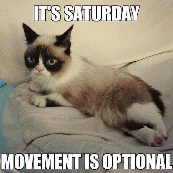 Picture of Grumpy cat giving the clear that you don't have to move AT ALL on Saturday - Cover image for Caturday list.