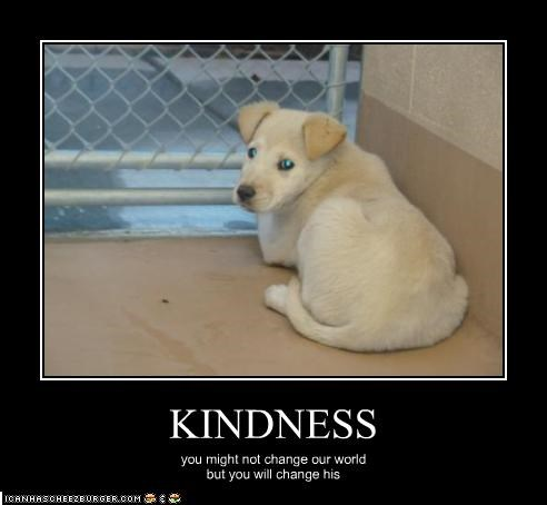 KINDNESS you might not change our world but you will change his