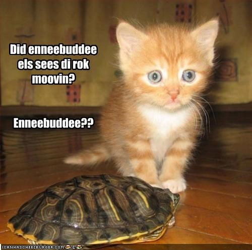 cute kitten lolturtles scared - 2124116224