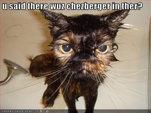 Cheezburger Image 2124840192