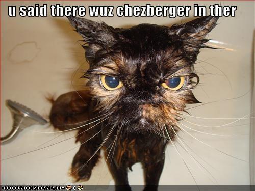 Cheezburger Image 2124849920