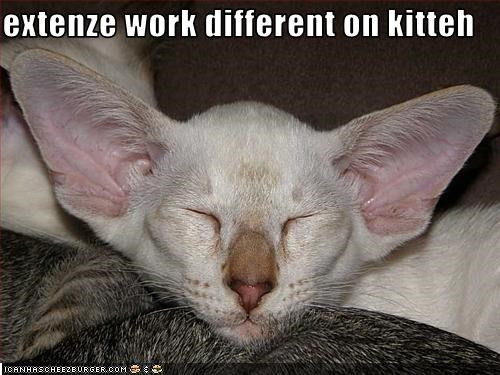 Extenze Work Different On Kitteh Cheezburger Funny Memes Funny