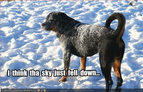 cold,covered,fall,rottweiler,sky,snow