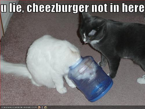 Cheezburger Image 212944128