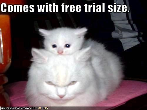 cute free kitten momcat - 2129449216