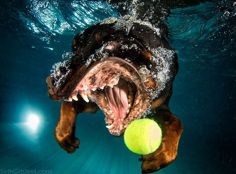 photos of dogs fetching their ball underwater