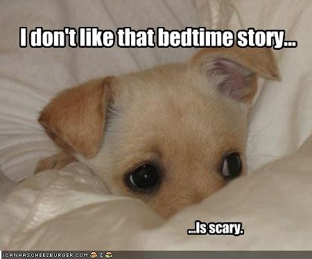 bedtime chihuahua puppy scary story tiny - 2132370688