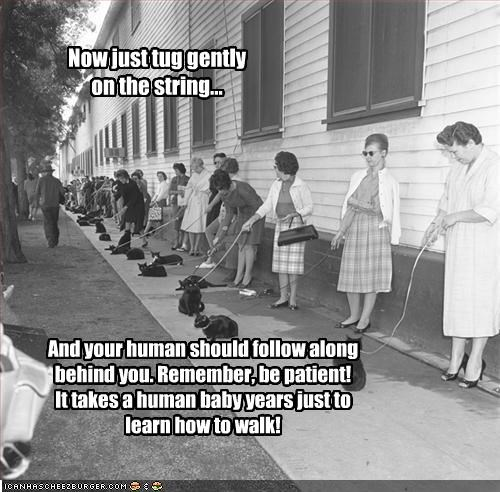 Now just tug gently on the string... And your human should follow along behind you. Remember, be patient! It takes a human baby years just to learn how to walk!
