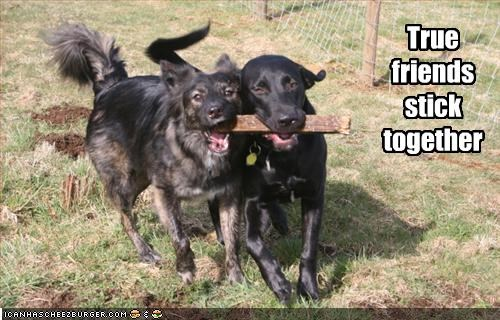 friends happy labrador sharing stick whatbreed - 2134876928