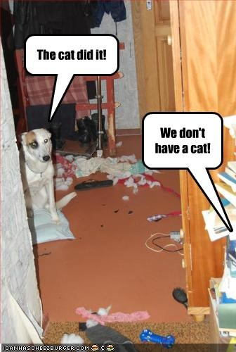 blame destruction lolcats mess mixed breed - 2136455424
