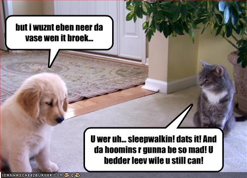blame,broken,destruction,golden retriever,lolcats,sleepwalking,vase