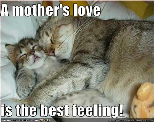 A mother's love is the best feeling! - Cheezburger - Funny Memes