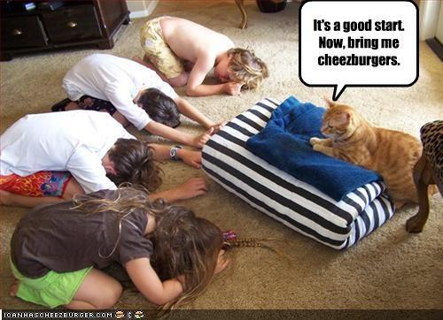 cheezburger want world domination - 2139471616