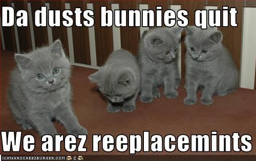 cute kitten look a like replacement - 2139979008