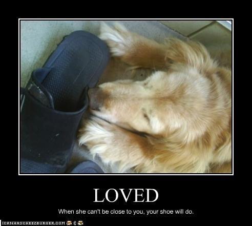 cuddle golden retriever love shoes - 2140613376