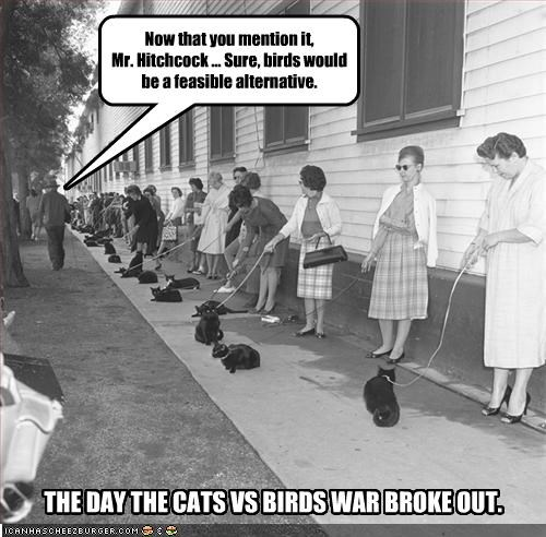 Now that you mention it, Mr. Hitchcock ... Sure, birds would be a feasible alternative. THE DAY THE CATS VS BIRDS WAR BROKE OUT.