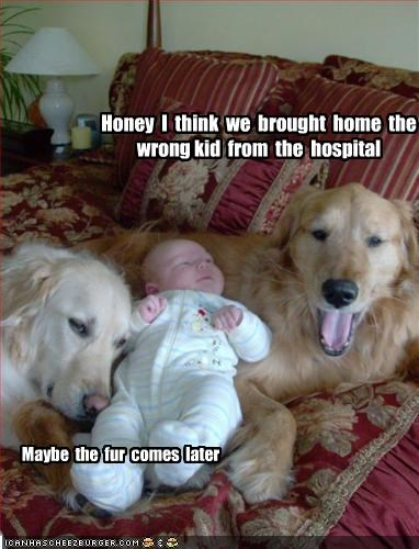 baby,fur,golden retriever,hospital,human,puppy