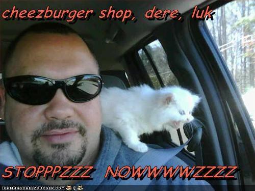 Cheezburger Image 2141106432