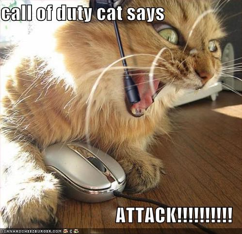 [Image: call-of-duty-cat-says-attack]