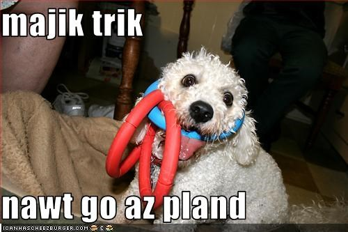 bichon frise,FAIL,magic,rings,stuck,trick