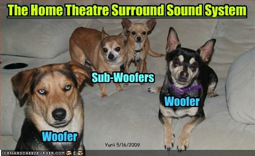 chihuahua stereo whatbreed woofer - 2149422336