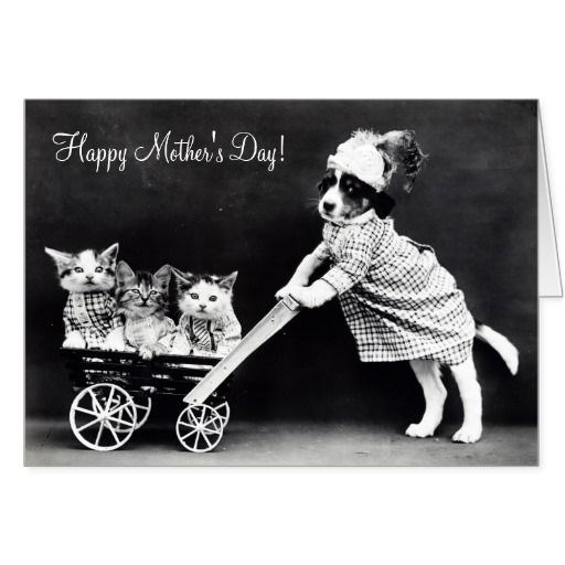dogs greeting cards mother day Cats - 2149637