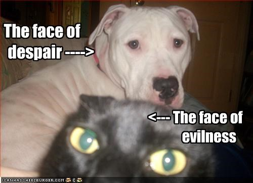 despair evil face lolcats pitbull Sad - 2151440640