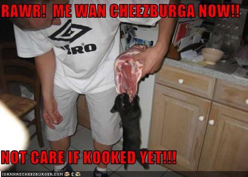 Cheezburger Image 2153975552