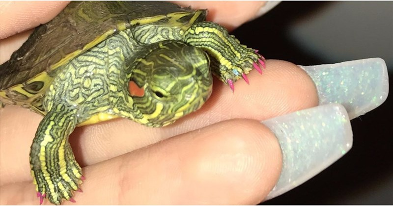 pet turtle owner gives her trendy manicure