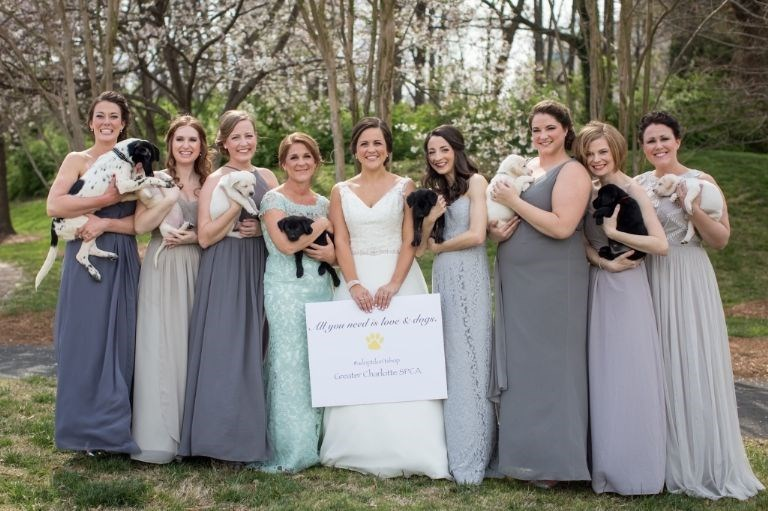 Bride uses puppies instead of bouquets at her wedding