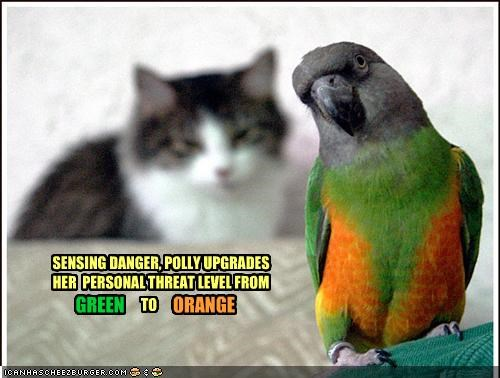 SENSING DANGER, POLLY UPGRADES HER PERSONAL THREAT LEVEL FROM GREEN TO ORANGE