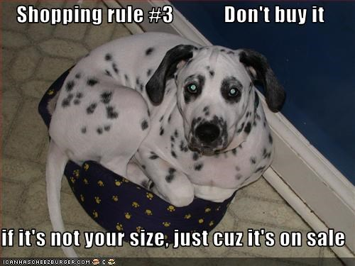 bed,dalmatian,sales,shopping,small,tight,tiny