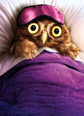 20 hilarious photos of owls