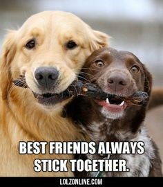 Picture of two dogs smiling and sharing a stick - cover photo for a list of pets and their best friends