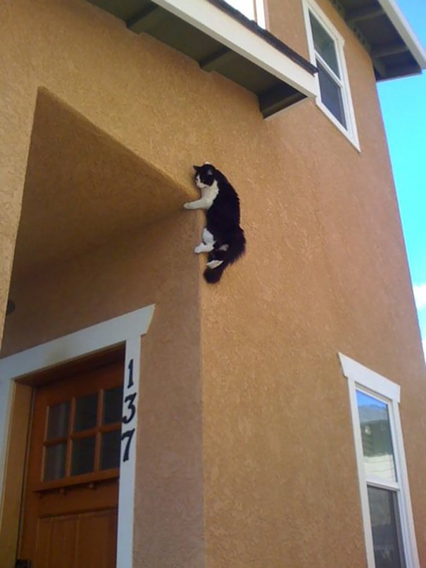 picture of a cat hiding on the side of a house - cover photo for list of cats that have mastered the ninja art.