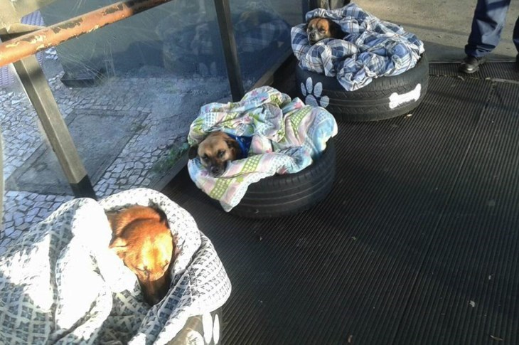 Stray dogs sleeping in make-shift beds made out of old tires and a blanket - Cover image of article about bus station employees in Brazil that helped out some stray dogs.