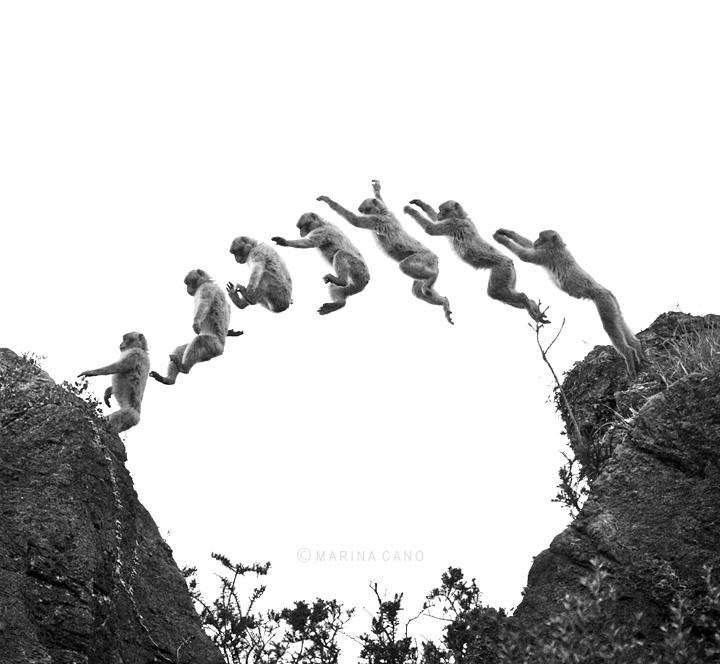 Multi black and white exposure showing the graceful jump of a chimpanzee between rocks - cover image for 18 beautiful wildlife photos by photographer Marina Cano.