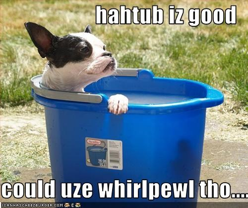 bath,bathtub,boston terrier,bucket,hot tub,relax,water