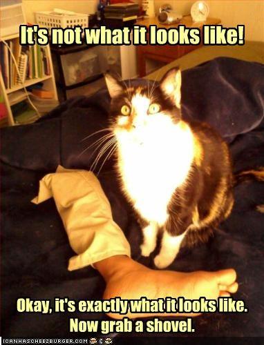 bad cat innocent murder oh noes - 2163331328