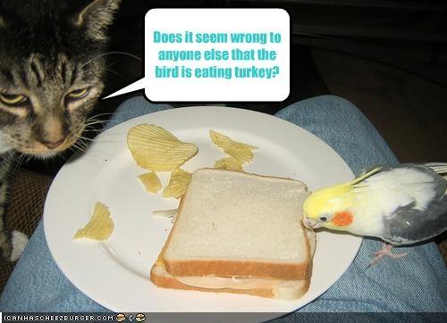 fud,lolbirds,murder,nom nom nom,sandwich