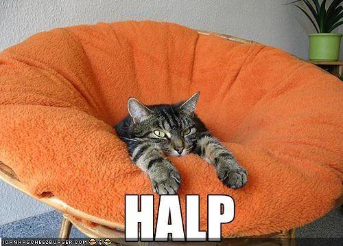 cat Hall of Fame halp lolcat ohnoes - 2164182272