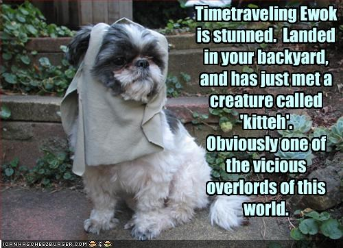 costume,ewok,kitteh,lolcats,shihtzu,time travel,vicious,world