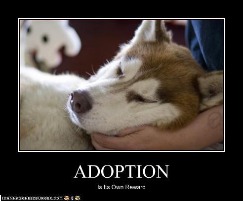 adoption love malamute mans-best-friend rescue reward
